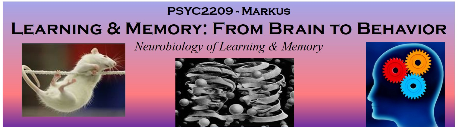 Neurobiology of Learning Class Banner